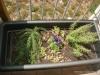 plantes_aromatiques_hort_urba_crae_salt_1