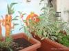 plantes_aromatiques_hort_urba_crae_salt_4