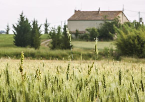 Can Moragues des d'un camp de blat. Imatge: Fundació Emys